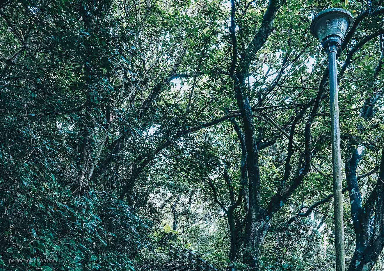 那覇の末吉公園は都会のオアシスかジャングルか